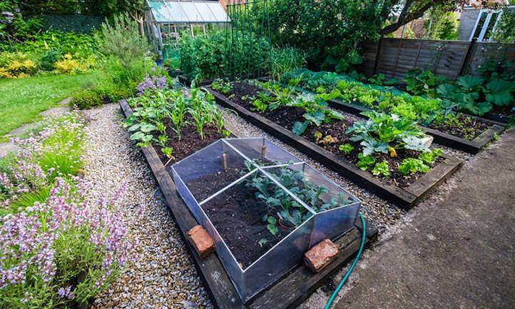 Raised mattress greenhouse gardens: suggestions & methods