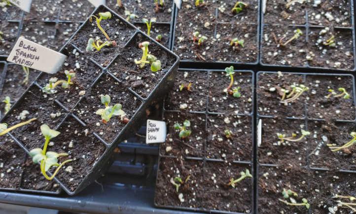 Beginning Indoor Seeds: An Introduction