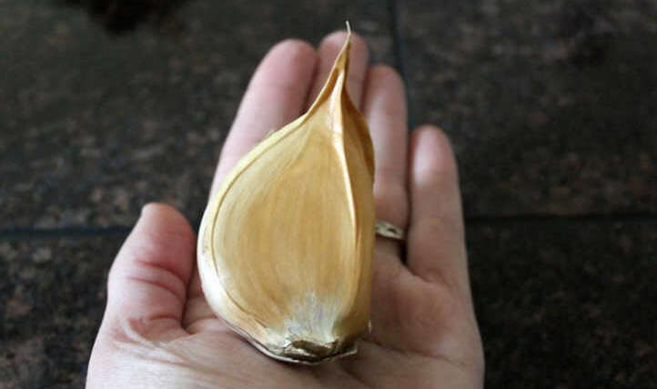 Elephant Garlic: Tremendous Giant Alliums