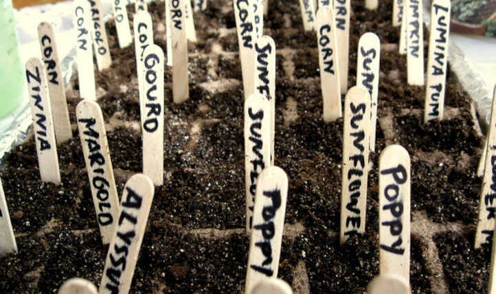 What number of seeds does it take to develop a plant?