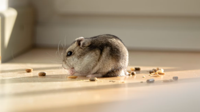 Kinds of illnesses that rodents transmit –  keep away from them